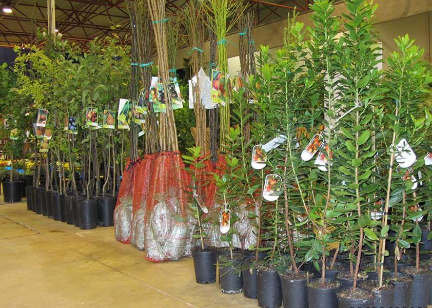 As nossas árvores em exposição